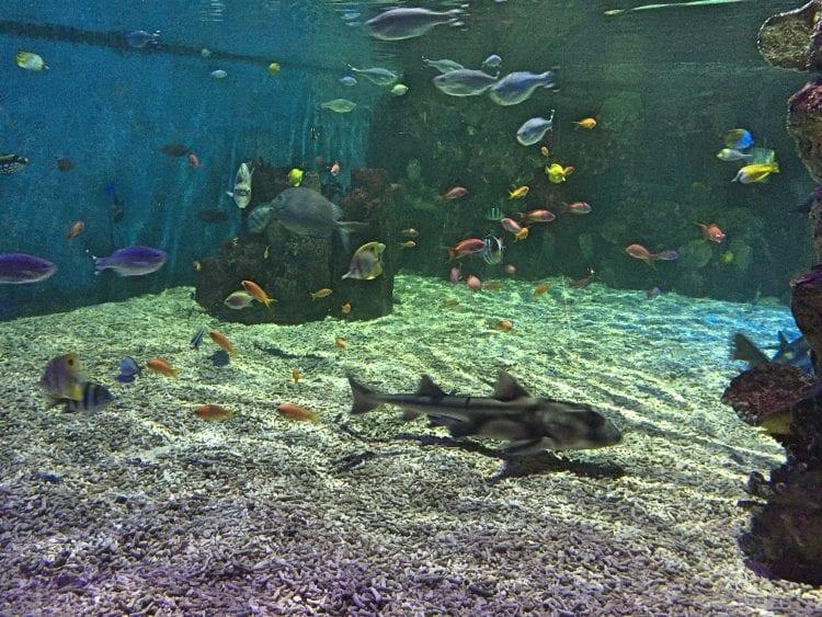 sea life centre fish