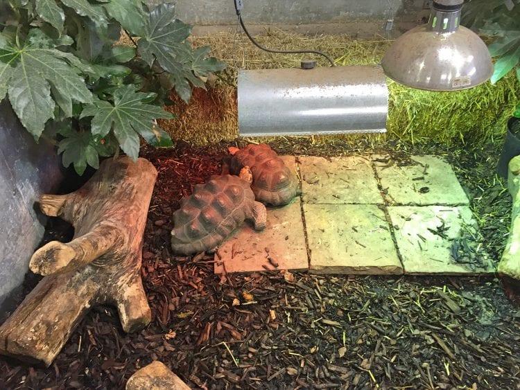 Wentworth Garden centre Tortoise